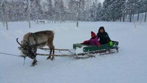 Reindeer sleighing at Niseko Hilton